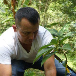 CORPOCHIVOR inicia auditoría del proyecto REDD+ para certificar y vender créditos o bonos de carbono por la conservación del bosque