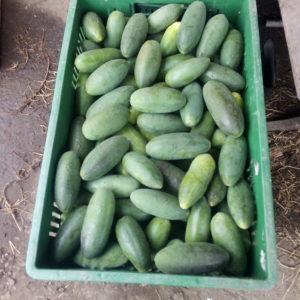 Curuba, otras frutas